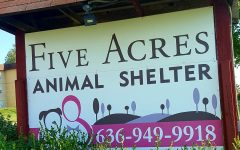 Five Acres Offers A Safe Place For Animals