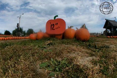 Rombach's Pumpkin Patch Inaugural Year [360]