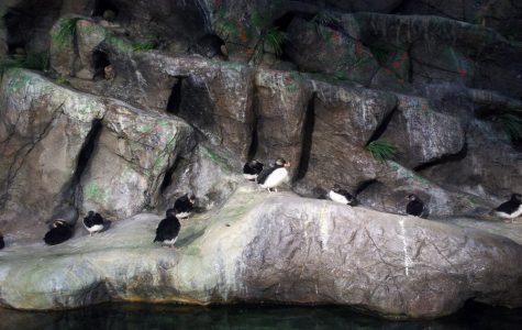 St. Louis Zoo Named Best Zoo In America