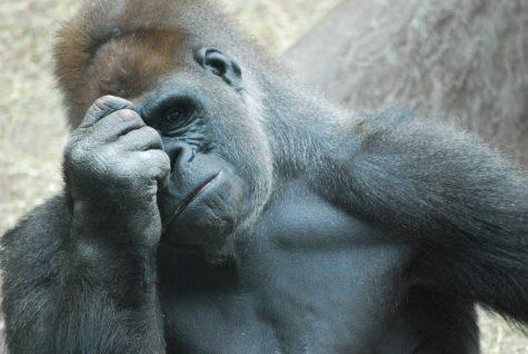 Zoo offers new exhibit in 2012