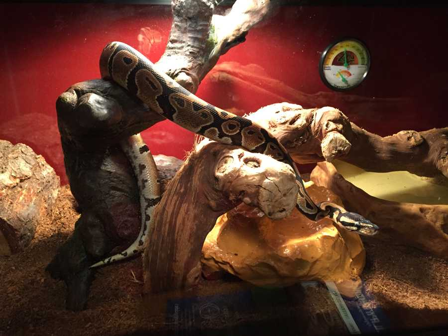 Slimy Serpent Makes Great Pet