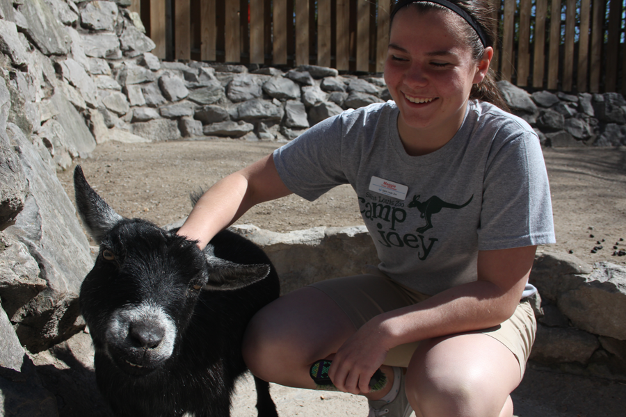 Junior Maggie Cox brushes a goat in the Children's Zoo.  Cox typically works in the Living World Building at the St. Louis Zoo.