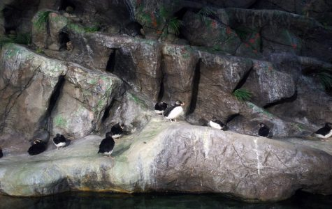 Penguins are seen at the St. Louis Zoo in Forest Park.
