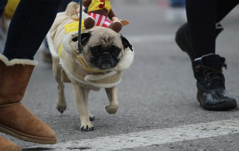 On Feb. 4 the annual Beggin' Pet Parade was held in Soulard at 12th and Allen. It's one of the events held in Soulard before Mardi Gras.