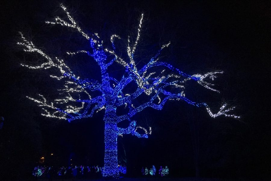 A tree glows through the night, lit up with Christmas lights at the 2018 Missouri Botanical Garden's Garden Glow.