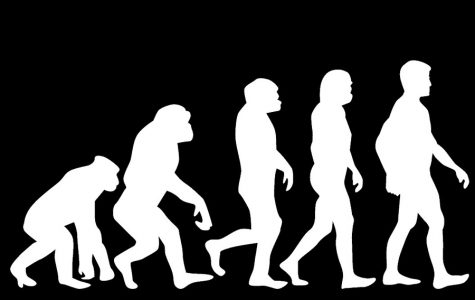 What I'm Interested In: Evolution