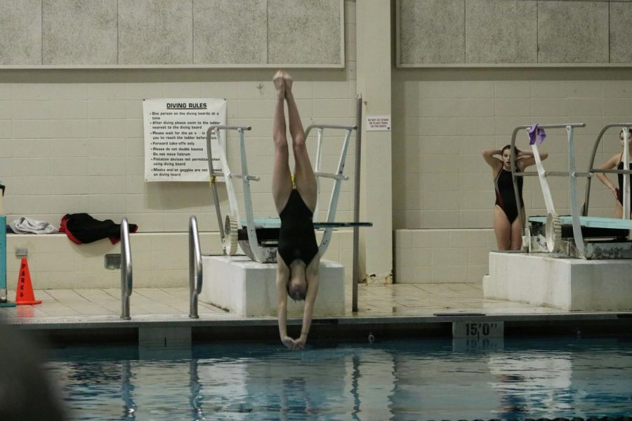 Senior+Kamryn+Bell+dives+into+the+water+at+a+meet+against+FZS+on+Jan.+29.
