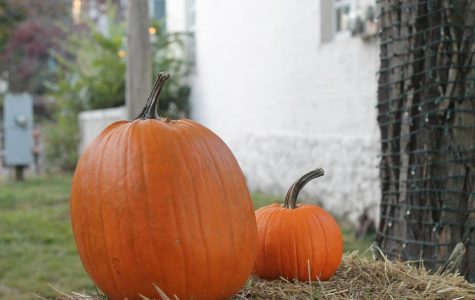 Saturday, Oct. 26: National Pumpkin Day.  This holiday was made to celebrate the squash that is such a big part of Halloween. Fun Fact: Pumpkins are actually fruits.