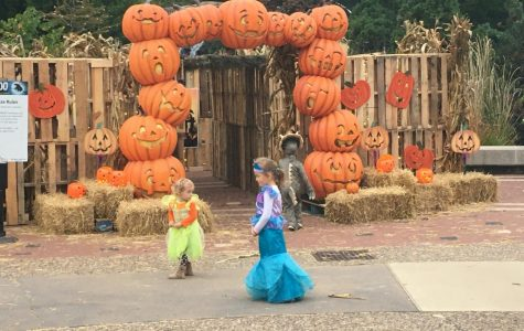 Saint Louis Zoo Hosts Annual Boo at the Zoo From Oct. 15 to 30