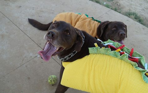 Annual Dogtoberfest to Take Place On Oct. 12