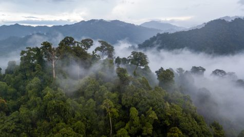 Why You Should Care About Saving the Amazon Rain Forest [Opinion]