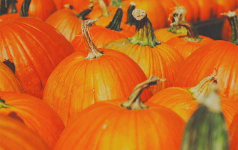 What Halloween Treat Are You? [QUIZ]
