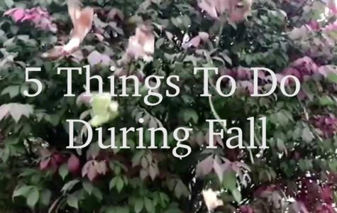 5 Things To Do During Fall