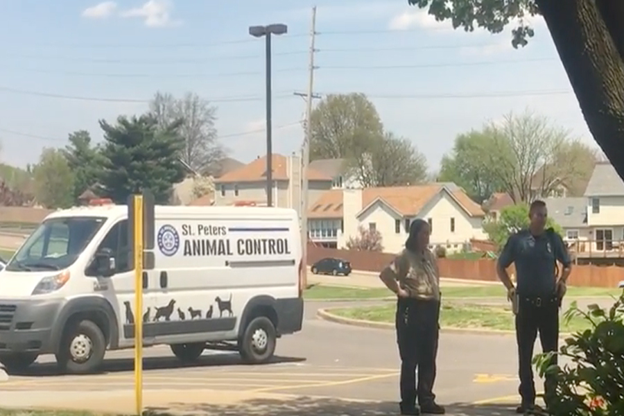 Animal Control Evacuates Ducks From Courtyard